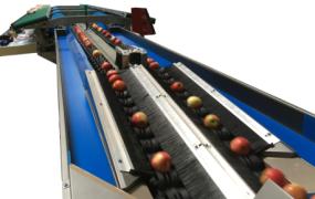 Máquina para Classificação de Fruta