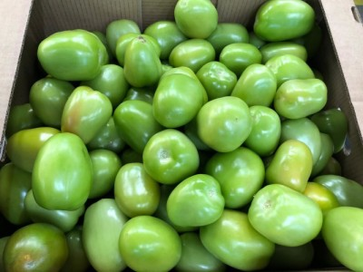 Tomates Verdes SORMA