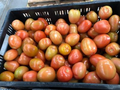 Tomates amadurecendo SORMA